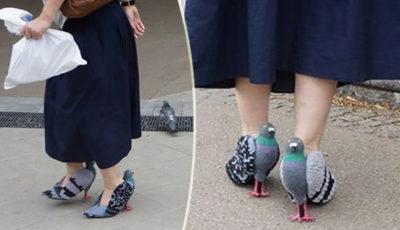 scarpe piccione