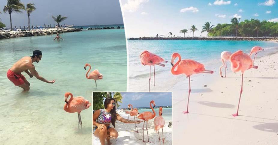 Ecco la spiaggia in cui puoi fare il bagno con i fenicotteri rosa: quelli veri