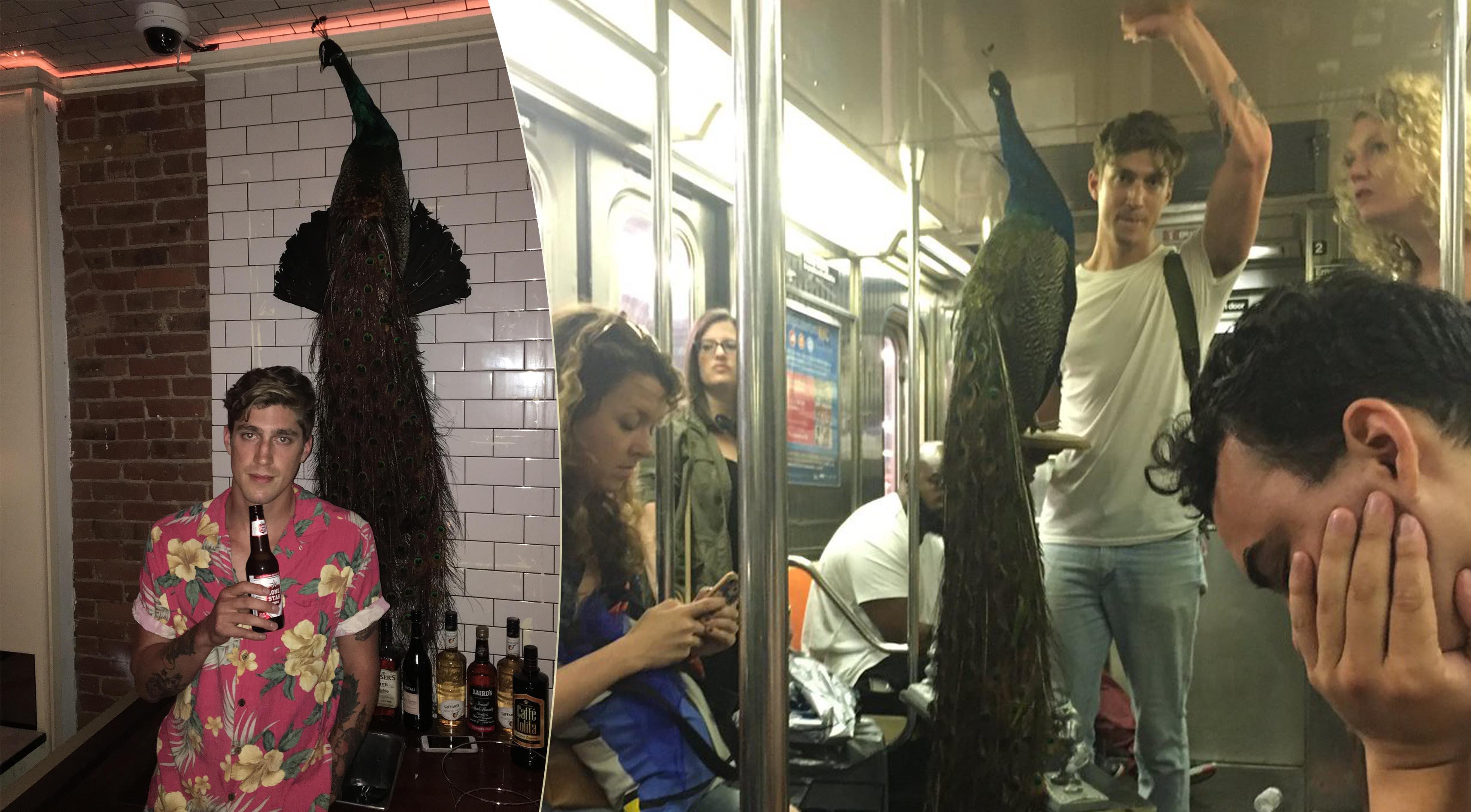 Un ragazzo va in giro con un pavone in metropolitana a New York