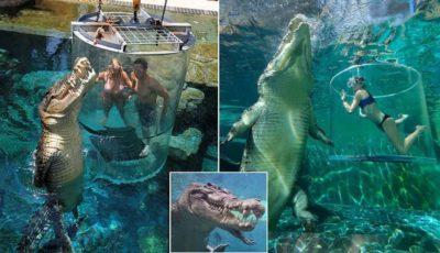 Attrazione da brivido: turisti pagano 110 euro per immergersi con i coccodrilli (VIDEO)