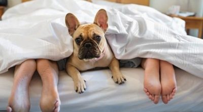 cane, letto, piedi
