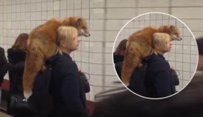 metro con volpe in spalla
