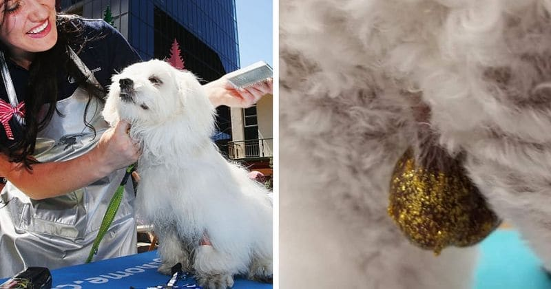 glitter dog cani testicoli