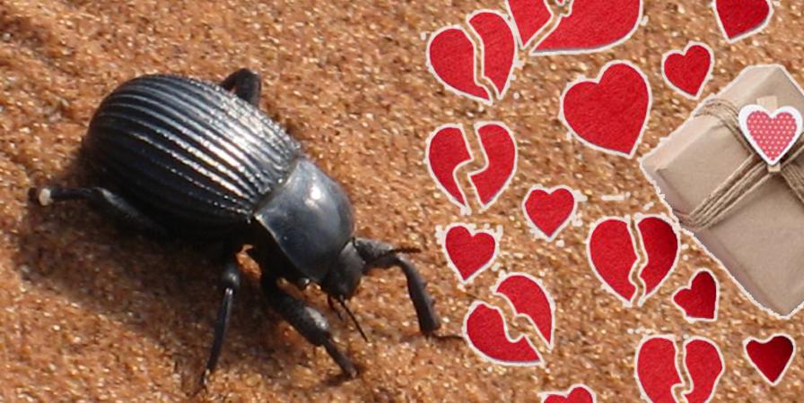san valentino scarafaggio