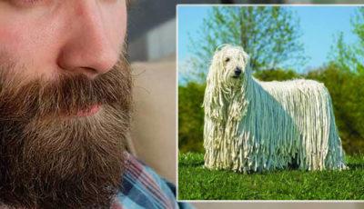 barba uomo cani pelosi