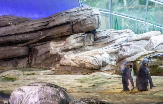 pinguini gay